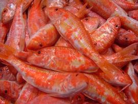 moll-salmonete - Pescados Carmen – Pescado Fresco y Marisco - Palma de Mallorca