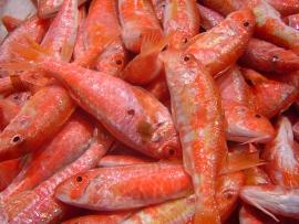 moll-salmonetes - Pescados Carmen – Pescado Fresco y Marisco - Palma de Mallorca