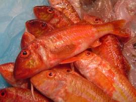 molls-salmonete - Pescados Carmen – Pescado Fresco y Marisco - Palma de Mallorca