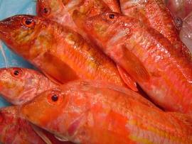 molls-salmonetes - Pescados Carmen – Pescado Fresco y Marisco - Palma de Mallorca