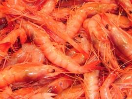 gambas-roja-mediterraneo - Pescados Carmen – Pescado Fresco y Marisco - Palma de Mallorca